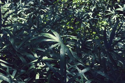 草木に覆われた玉川上水沿いの風景・9月