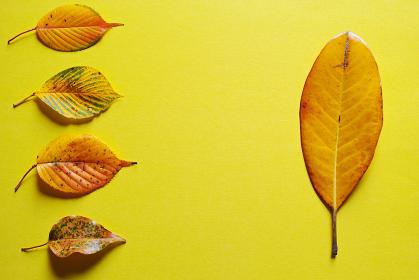 黄色い紙の上に置いた5枚の落ち葉。秋のイメージ。