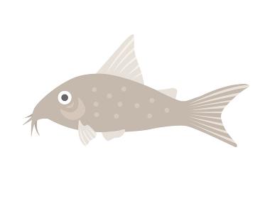 熱帯魚のコリドラスのイラスト