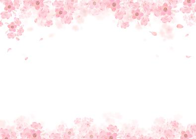 春 桜 背景 フレーム 水彩 イラスト