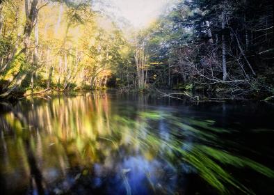 北海道阿寒国立公園 阿寒湖の周辺には清流の小川が多く、淡水魚の産卵場所として知られている