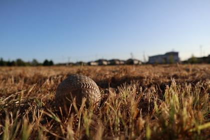 空き地に置かれた野球ボール