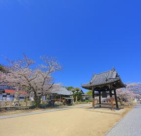尾道 桜満開 宝土寺