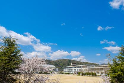 学校と桜の花 春 入学式 新学期