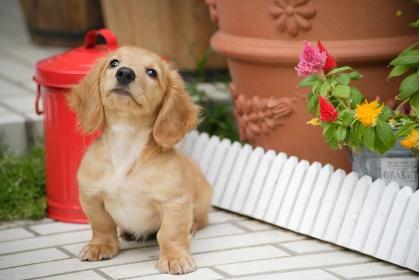 おすわりする仔犬