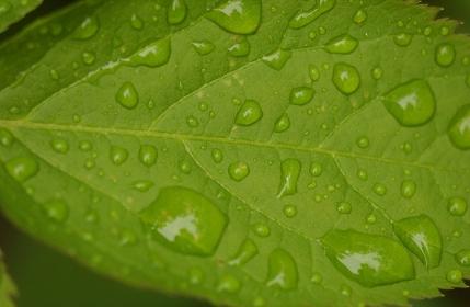 葉の表面に浮かぶ水滴