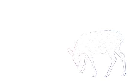 写実的な動物イラスト、虹色の雌鹿が足元を見