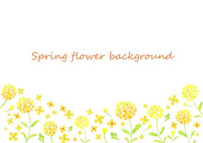 水彩で描いた菜の花畑の背景イラスト