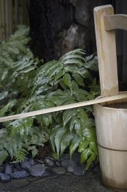 庭の水桶と植物