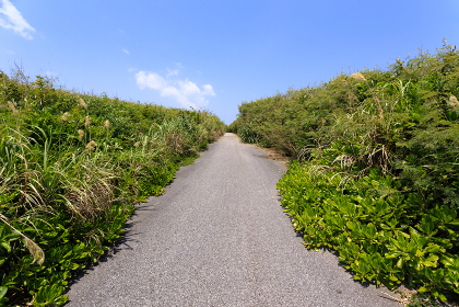 日本最南端、沖縄県波照間島の道
