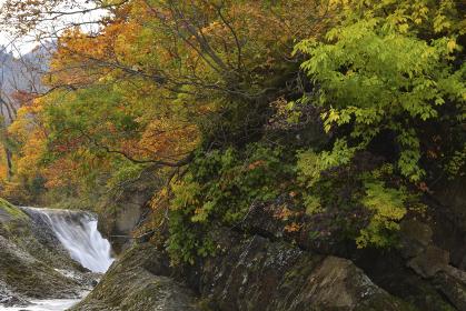 紅葉のかじか滝