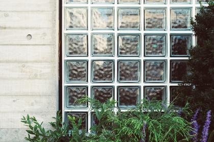 ガラスブロックとコンクリートの壁面と植物