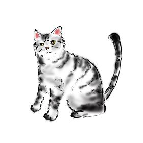 手描きイラスト素材 ネコ 猫 ねこ アメリカンショートヘア アメリカンショートヘアー アメショー