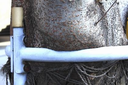 鉄棒に食い込んだ街路樹の幹
