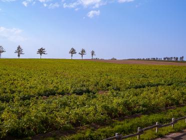 北海道の広大な畑
