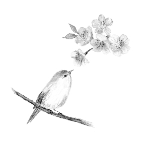 ウグイスと桜のモノクロイラスト 水墨画風