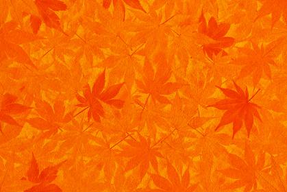 オレンジ色の和紙と紅葉の背景素材