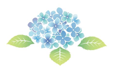 自然 植物 梅雨のイメージ紫陽花あじさい ブルー ベクターデータ