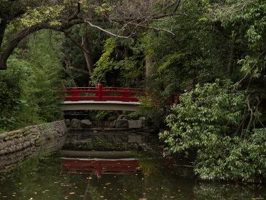 日本の神社の風景 氷川神社の池 埼玉県さいたま市