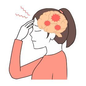 脳の断面図 頭痛 女性