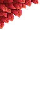 イラスト素材 新緑 葉 赤 背景 フレーム