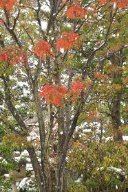 見沼田圃斜面林・降雪