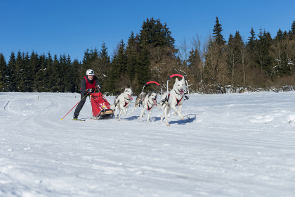 german championship sled dog forest women 's forest 2015