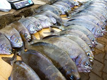 チリ・イースター島で朝の野外市場で並ぶ新鮮な魚