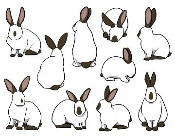 おすわりウサギ ヒマラヤンセット