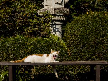 ベンチの上であくびをする猫