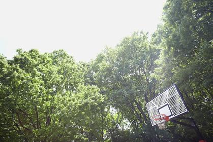 新緑とバスケットゴール