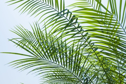観葉植物と青空