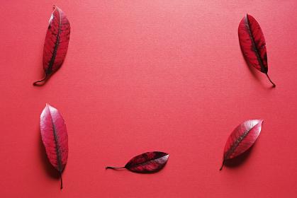 赤い紙の上に置いた五枚の赤い落ち葉。秋のイメージ。
