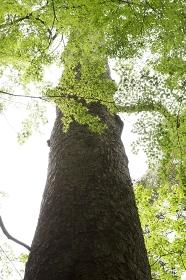 奈良春日山原始林