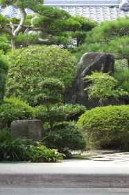 民家の庭の見事な植木