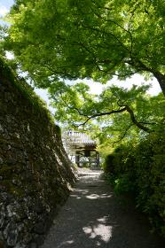 新緑の善峯寺 鐘楼堂への参道 京都市西京区