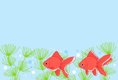 涼しげな金魚の背景イラスト
