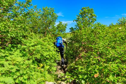 高山植物帯のトンネルを進む登山者