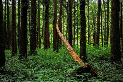 倒木のある6月の森の風景