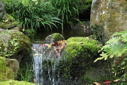 落ち葉の流れる段差のある小川 1