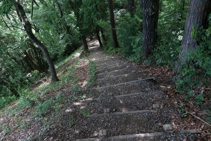 登山道の木製階段 (下り)