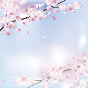 background_sakura 1_3