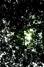 樹木のテクスチャー(木陰・光・木漏れ日・葉っぱ)