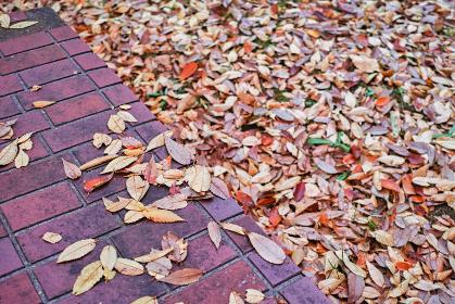 対角線構図のレンガのベンチの上に散った落葉と落葉で覆われた地面