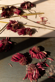 Dried Red flowers with angular shadows