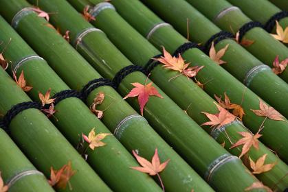 秋の風景 井戸蓋の落葉