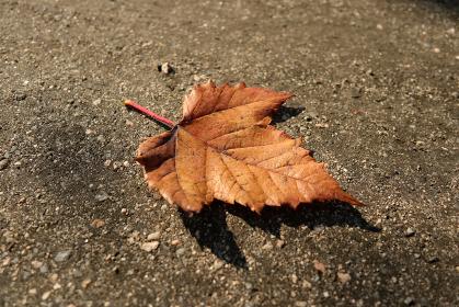 地面に落ちた一枚の枯れ葉