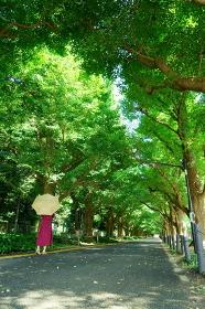 銀杏並木を奥に向かって歩く黄色い日傘をさした赤いワンピースの女性 左側