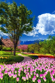 長野県・安曇野市 春の国営アルプスあづみの公園