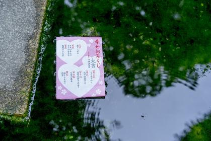 池に浮かぶおみくじの紙